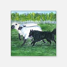 "bel shep herd Square Sticker 3"" x 3"""