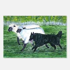 bel shep herd Postcards (Package of 8)