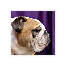 """bulldogprofile Square Sticker 3"""" x 3"""""""