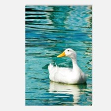 SittingDuck_9x12 Postcards (Package of 8)