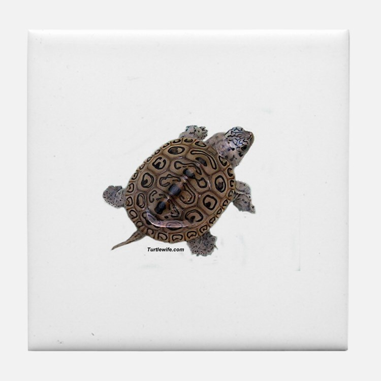 Diamondback Terrapin baby Tile Coaster