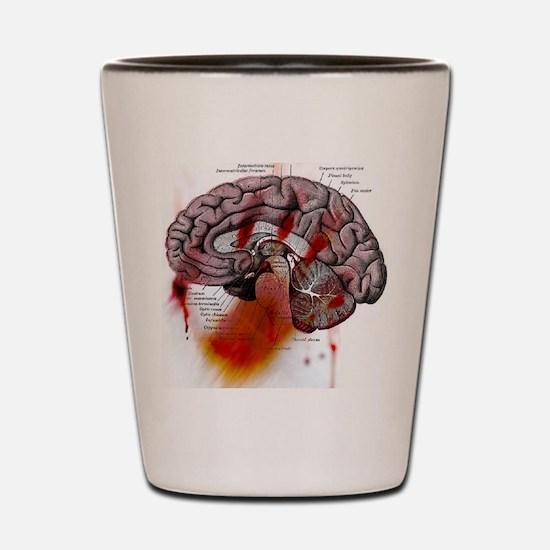 brain_diag Shot Glass