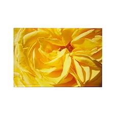 A Rose Orange Yellow 10M Roses Ro Rectangle Magnet