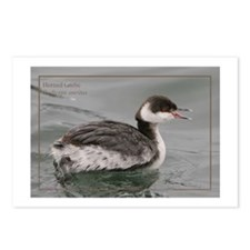 Horned Grebe Postcards (Package of 8)