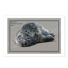 Gray Seal Pup Postcards (Package of 8)