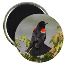 aEagles Redwings 678 tile Magnet