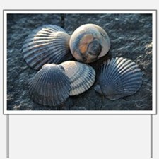 Sea Shells Yard Sign