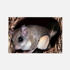 Flying Squirrel Rectangle Magnet