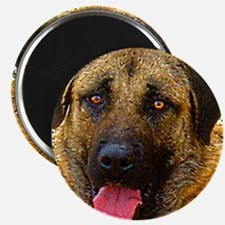 Anatolian shepherd dog Magnet