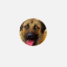 Anatolian shepherd dog Mini Button