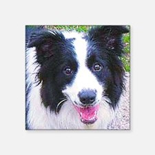 "Border-Collie Square Sticker 3"" x 3"""