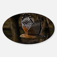 (4) Red Shouldered Hawk Flying Decal
