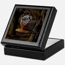 (15) Red Shouldered Hawk Flying Keepsake Box