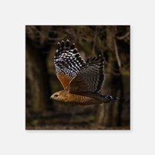 "(15) Red Shouldered Hawk Fl Square Sticker 3"" x 3"""