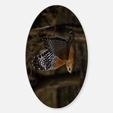 (9) Red Shouldered Hawk Flying Decal