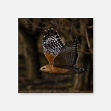 "(14) Red Shouldered Hawk Fl Square Sticker 3"" x 3"""