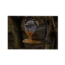 (14) Red Shouldered Hawk Flying Rectangle Magnet