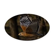 (14) Red Shouldered Hawk Flying Oval Car Magnet