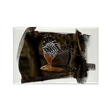 (16) Red Shouldered Hawk Flying Rectangle Magnet