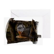 (16) Red Shouldered Hawk Flying Greeting Card