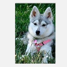 Alaskan Klee Kai Puppy Postcards (Package of 8)