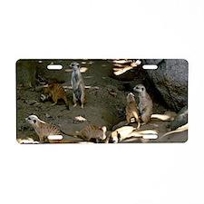 A Family Of Meerkats Aluminum License Plate