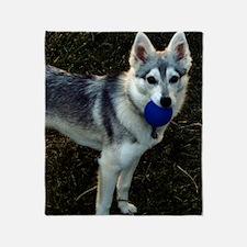 Alaskan Klee Kai Puppy holding a bal Throw Blanket