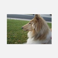 Collie Profile Rectangle Magnet