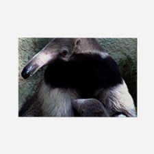 Mother Anteater nursing her young Rectangle Magnet