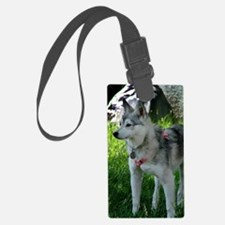 Alaskan Klee Kai looking into th Luggage Tag