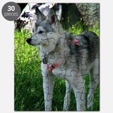 Alaskan Klee Kai looking into the distance Puzzle