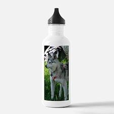 Alaskan Klee Kai looki Water Bottle