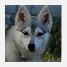 Alaskan Klee Kai Puppy Portrait Tile Coaster