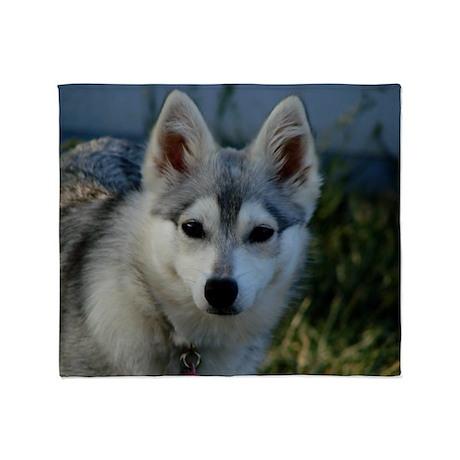 Alaskan Klee Kai Puppy Portrait Throw Blanket