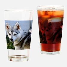 Alaskan Klee Kai Puppy looking over Drinking Glass
