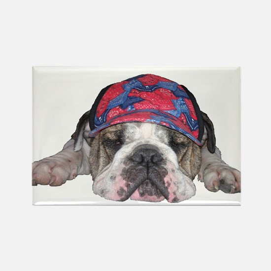 Bulldog with a hat Magnets