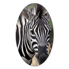 single zebra Decal
