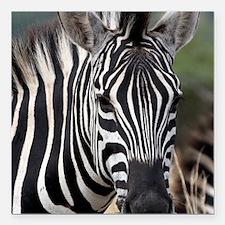 """single zebra Square Car Magnet 3"""" x 3"""""""