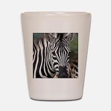 single zebra Shot Glass