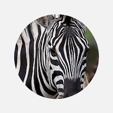 "single zebra 3.5"" Button"