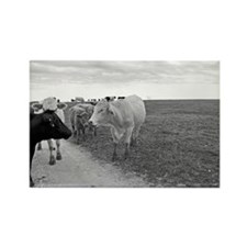 Cows-010-2-Poster Rectangle Magnet