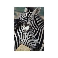 zebra nuzzling card Rectangle Magnet