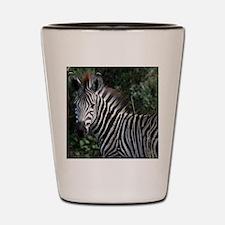 young zebra note Shot Glass