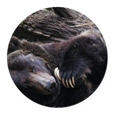 A Sleeping Grizzly Bear Round Car Magnet