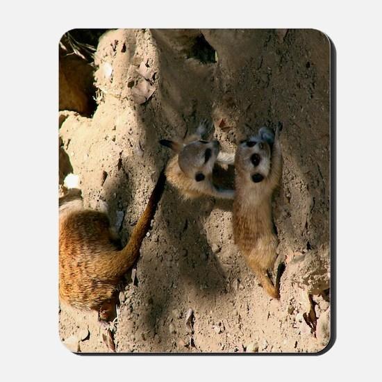 Two Baby Meerkats Mousepad