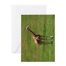 A UGANDA GIRAFFE Greeting Card