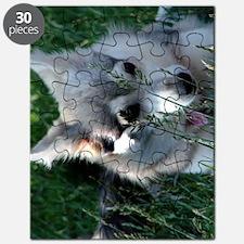 Alaskan Klee Kai hiding in grass Puzzle