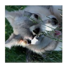 Alaskan Klee Kai hiding in grass Tile Coaster