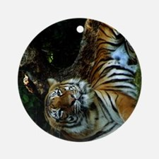 A Happy Indochinese Tiger Round Ornament