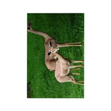 Two Gerenuk Antelope Rectangle Magnet